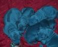 голубой тайский риджбек