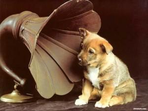 слух собак